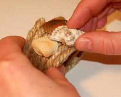 photo of adding shells