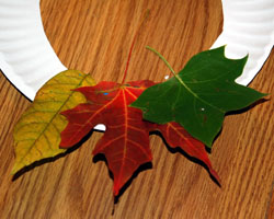 three leaves on wreath