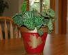 leaf stenciled flower pot